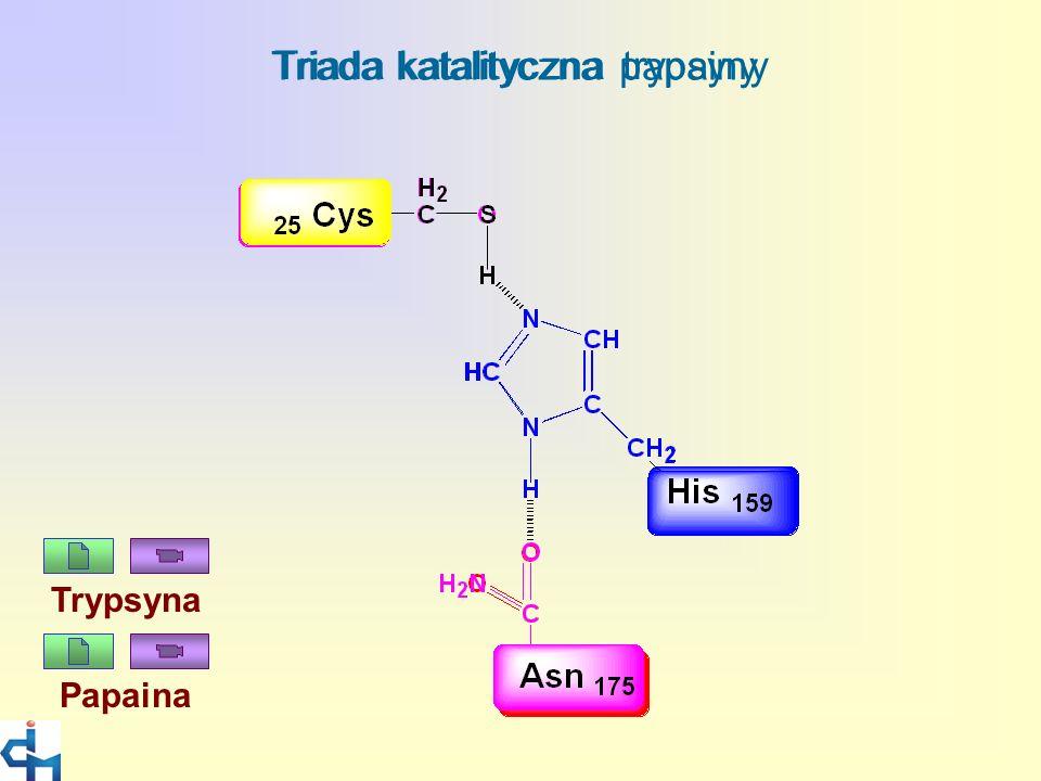 Triada katalityczna papainy Triada katalityczna trypsyny