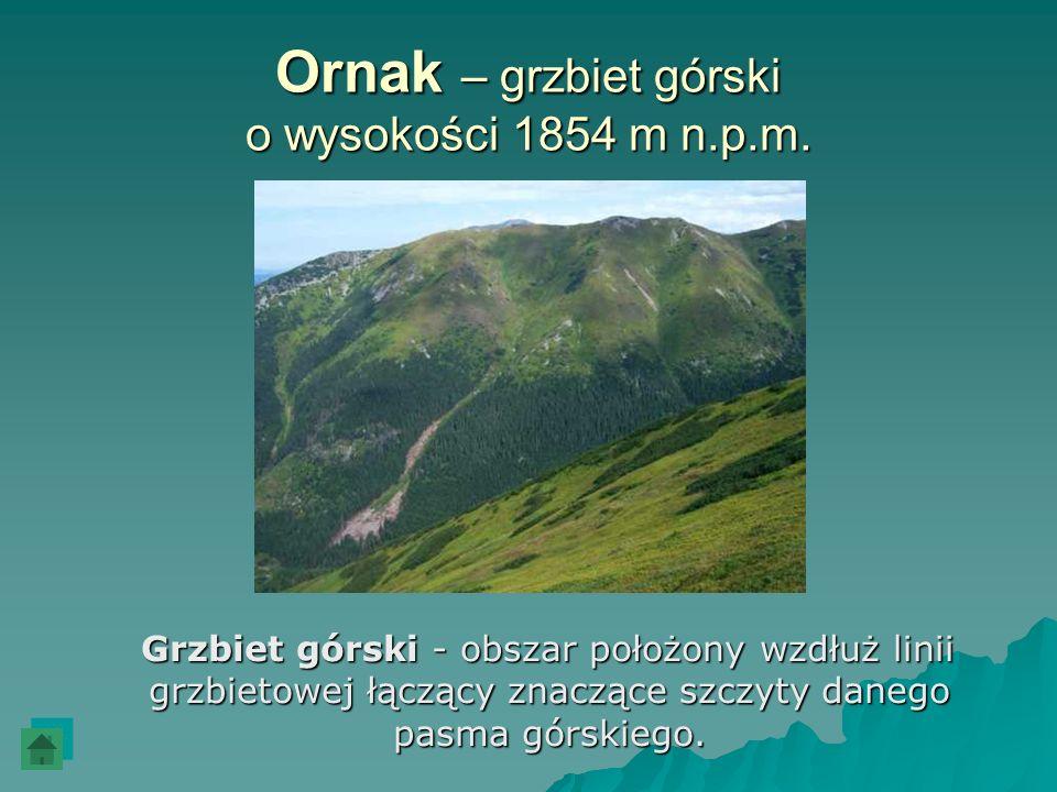 Ornak – grzbiet górski o wysokości 1854 m n.p.m.