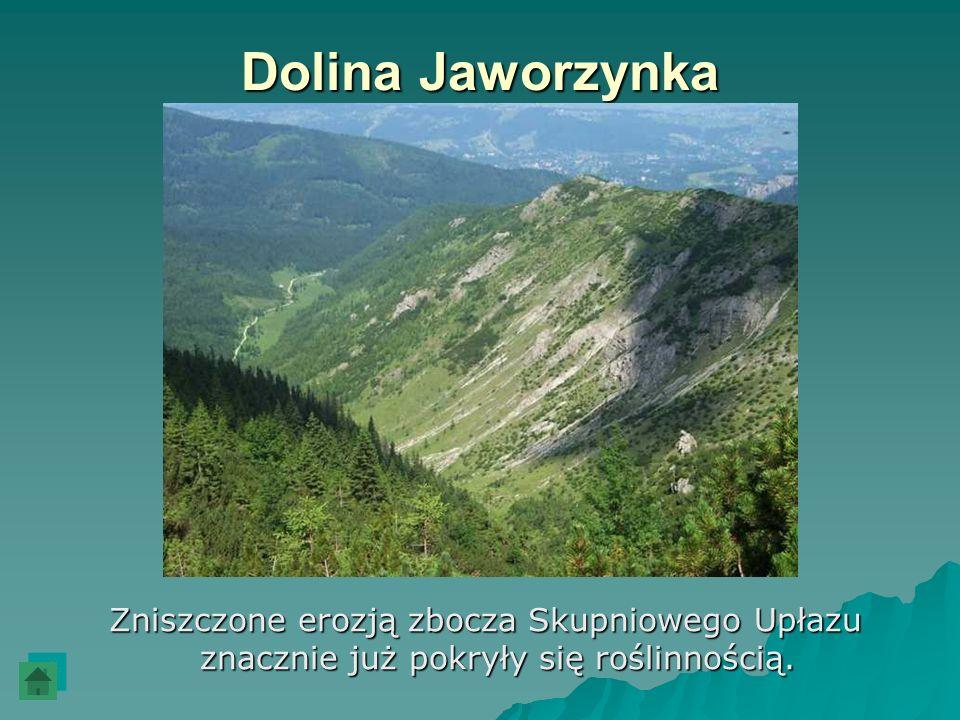 Dolina JaworzynkaZniszczone erozją zbocza Skupniowego Upłazu znacznie już pokryły się roślinnością.