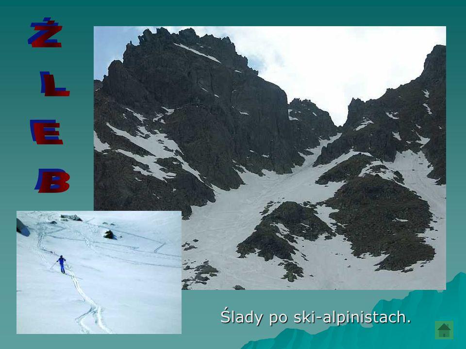 Ślady po ski-alpinistach.