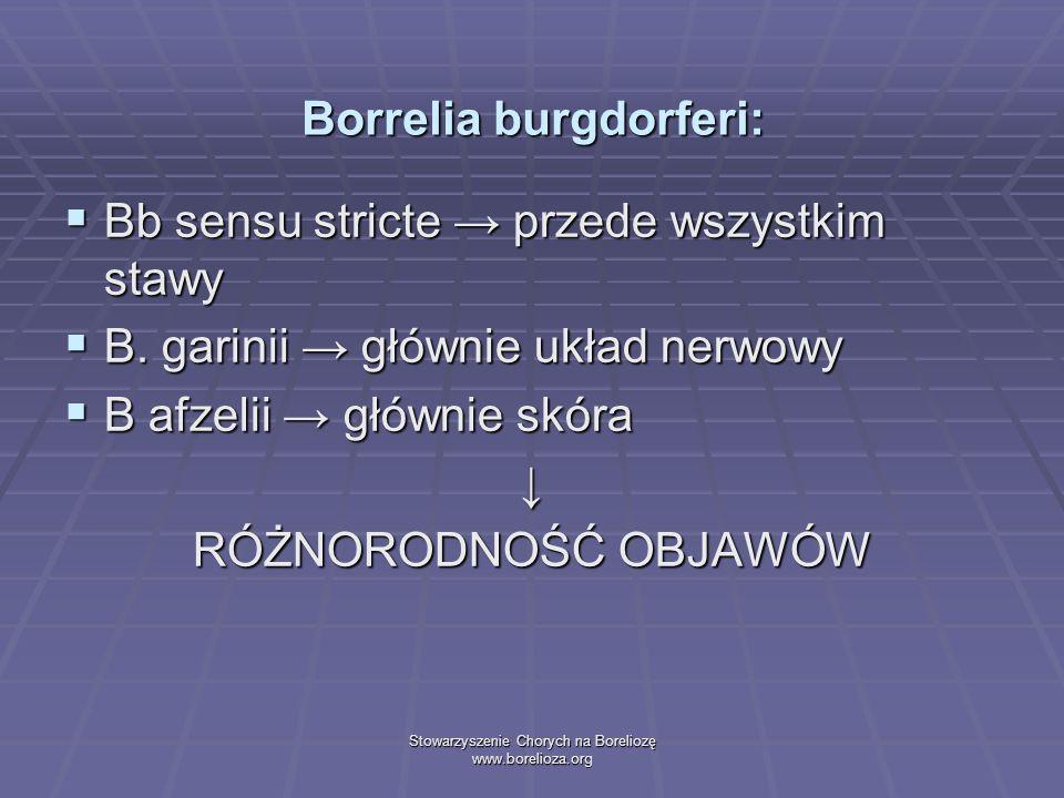 Borrelia burgdorferi: