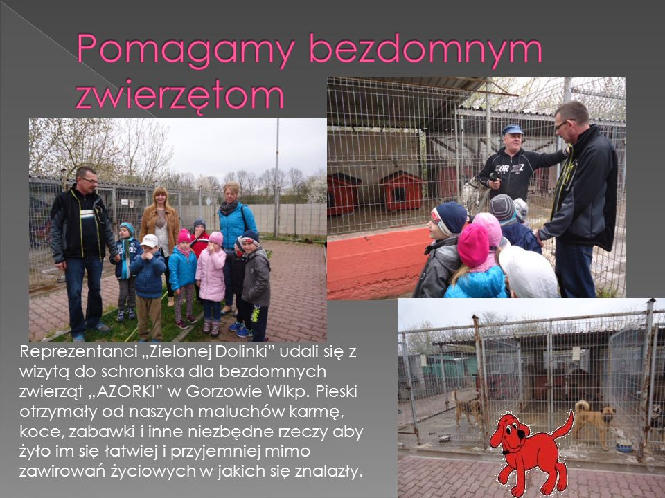 Pomagamy bezdomnym zwierzętom