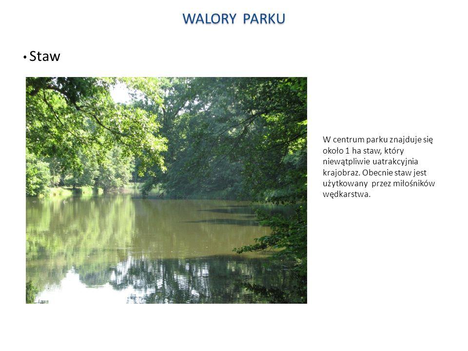 WALORY PARKU Staw.