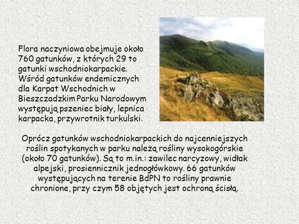 Flora naczyniowa obejmuje około 760 gatunków, z których 29 to gatunki wschodniokarpackie. Wśród gatunków endemicznych dla Karpat Wschodnich w Bieszczadzkim Parku Narodowym występują pszeniec biały, lepnica karpacka, przywrotnik turkulski.