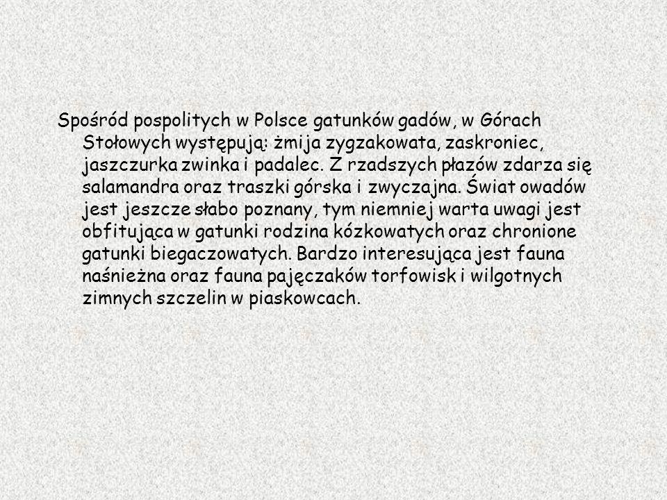 Spośród pospolitych w Polsce gatunków gadów, w Górach Stołowych występują: żmija zygzakowata, zaskroniec, jaszczurka zwinka i padalec.