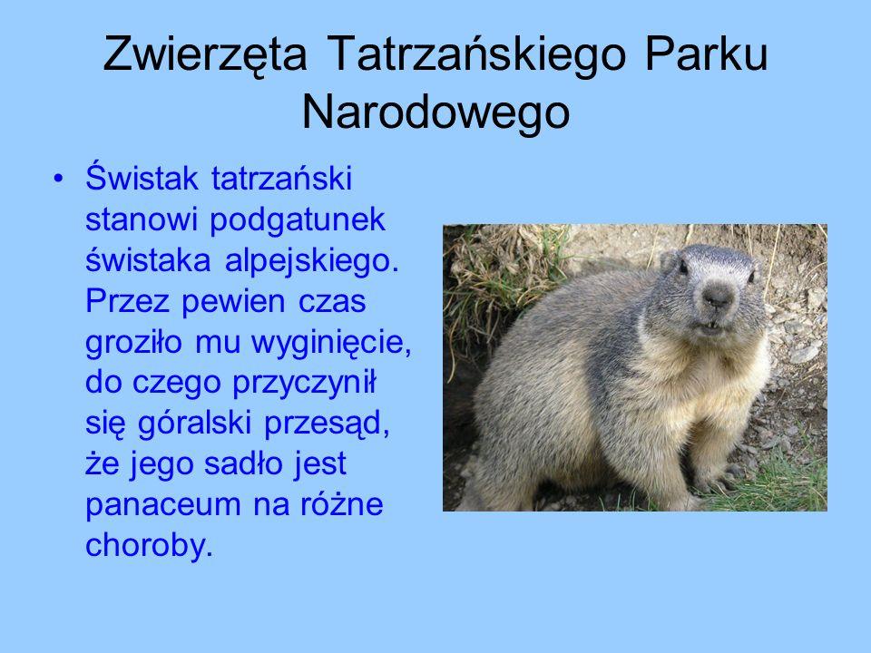 Zwierzęta Tatrzańskiego Parku Narodowego