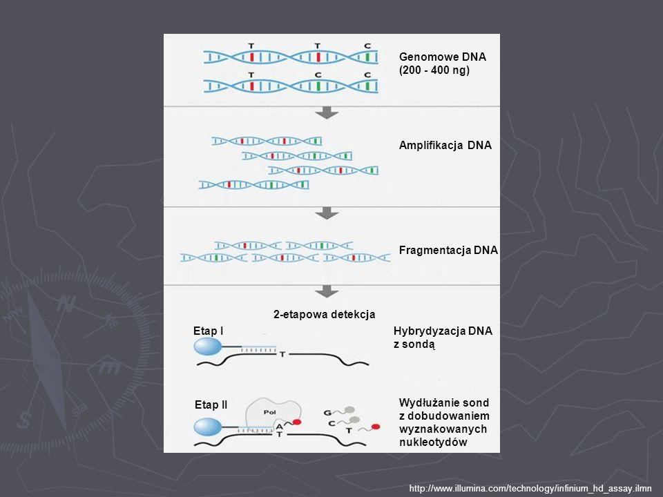 Hybrydyzacja DNA z sondą