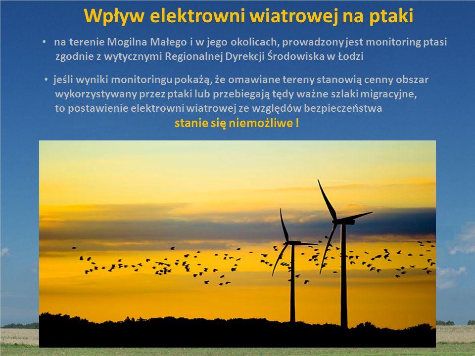Wpływ elektrowni wiatrowej na ptaki