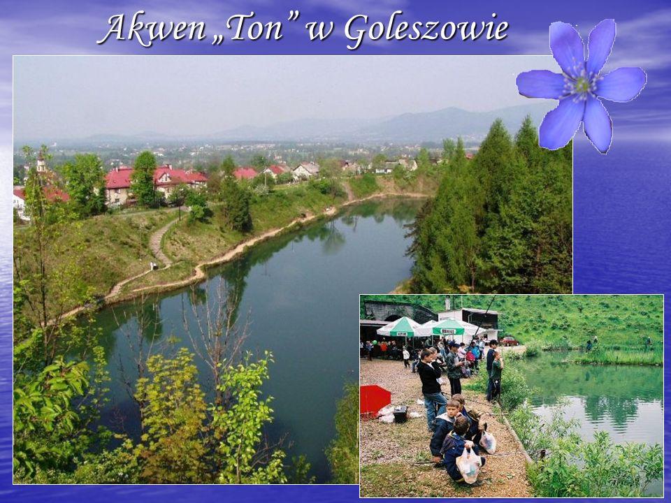 """Akwen """"Ton w Goleszowie"""