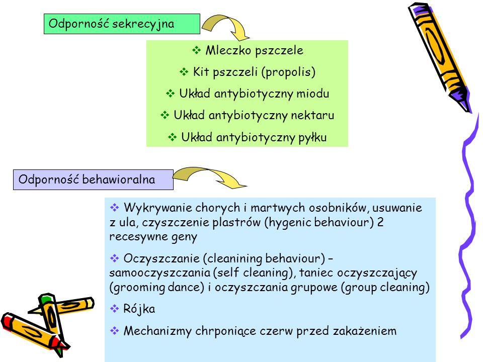 Kit pszczeli (propolis) Układ antybiotyczny miodu