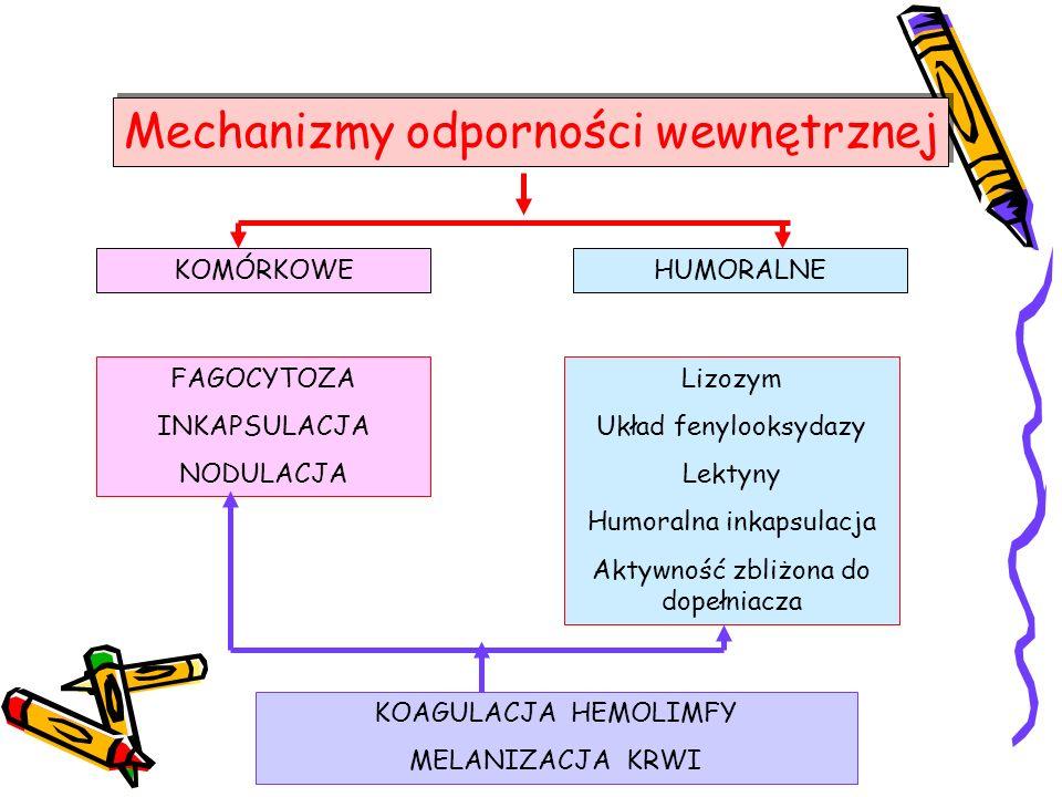 Mechanizmy odporności wewnętrznej