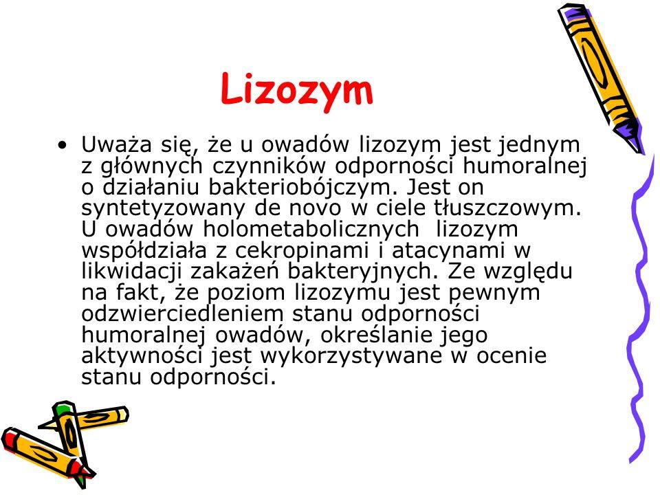 Lizozym