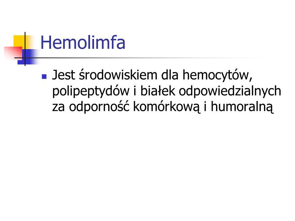 Hemolimfa Jest środowiskiem dla hemocytów, polipeptydów i białek odpowiedzialnych za odporność komórkową i humoralną.