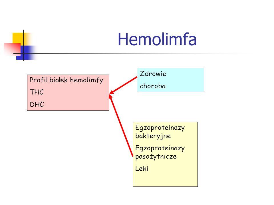 Hemolimfa Zdrowie choroba Profil białek hemolimfy THC DHC