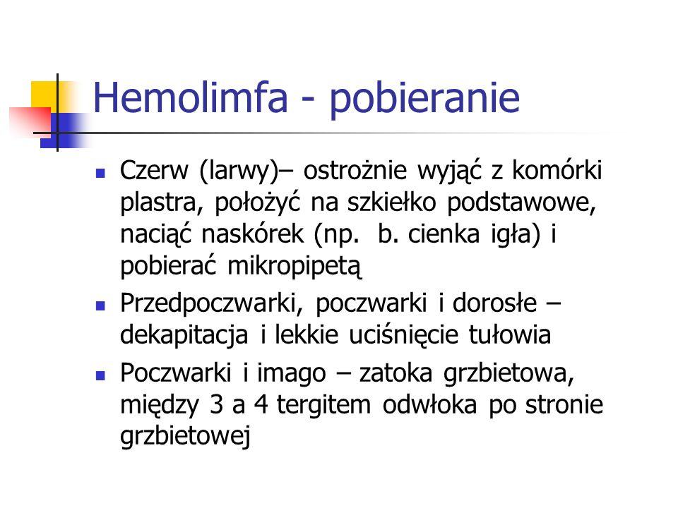 Hemolimfa - pobieranie