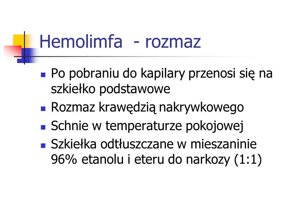 Hemolimfa - rozmazPo pobraniu do kapilary przenosi się na szkiełko podstawowe. Rozmaz krawędzią nakrywkowego.