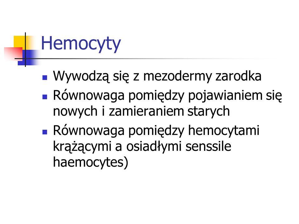Hemocyty Wywodzą się z mezodermy zarodka