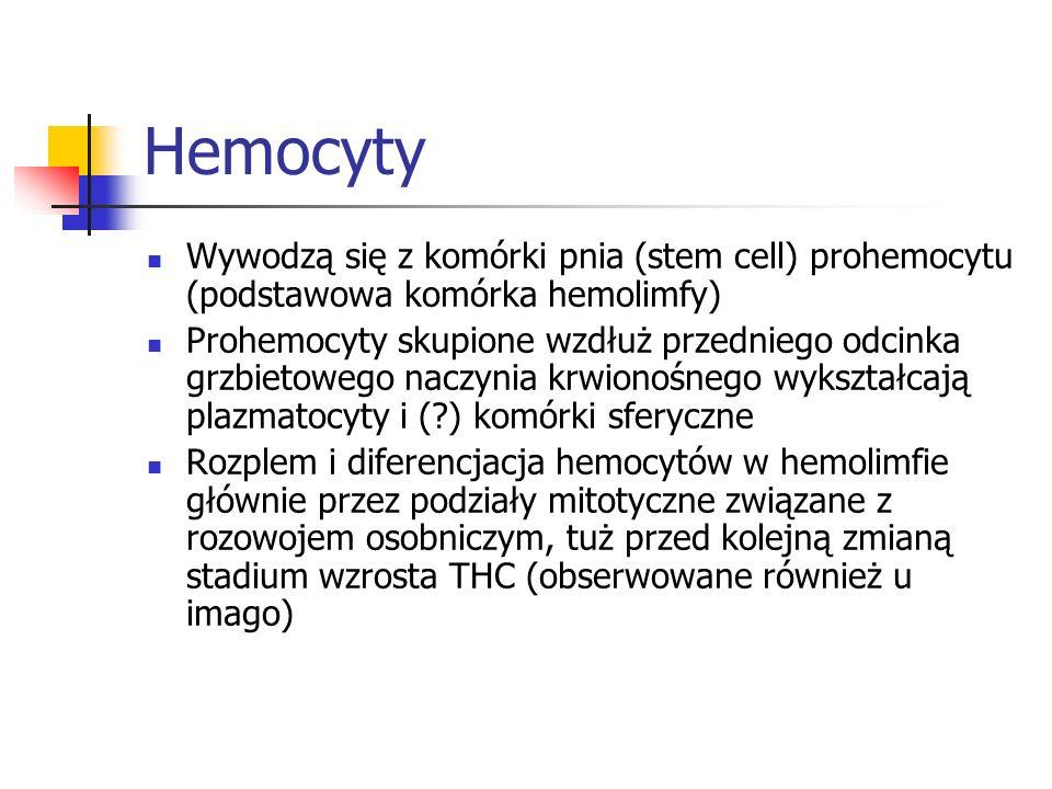 Hemocyty Wywodzą się z komórki pnia (stem cell) prohemocytu (podstawowa komórka hemolimfy)