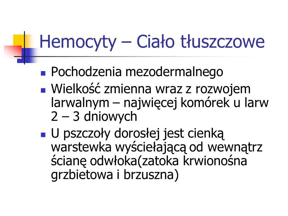 Hemocyty – Ciało tłuszczowe