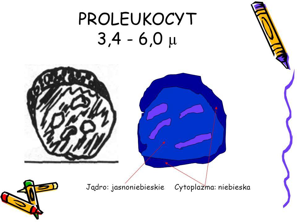 PROLEUKOCYT 3,4 - 6,0 µ Jądro: jasnoniebieskie Cytoplazma: niebieska