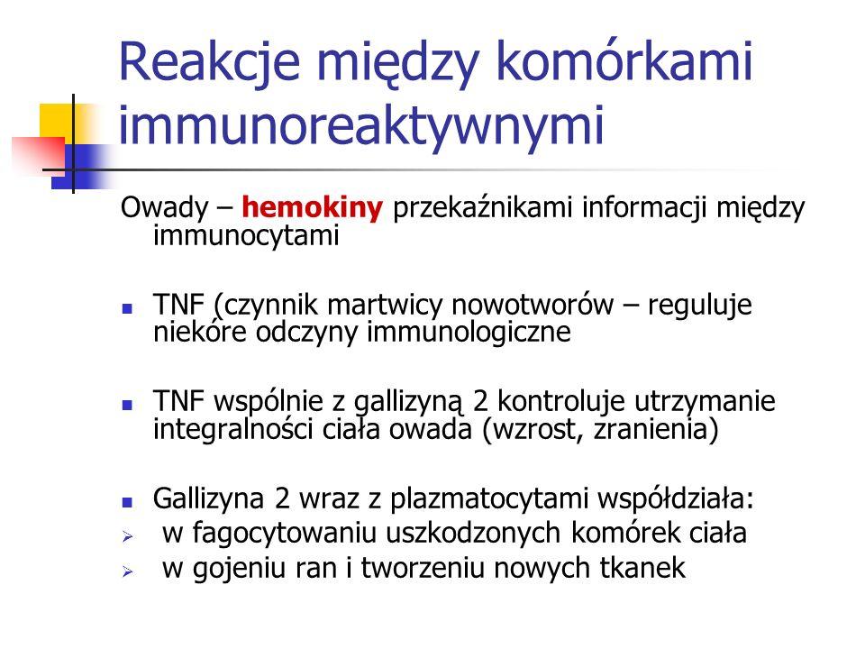 Reakcje między komórkami immunoreaktywnymi