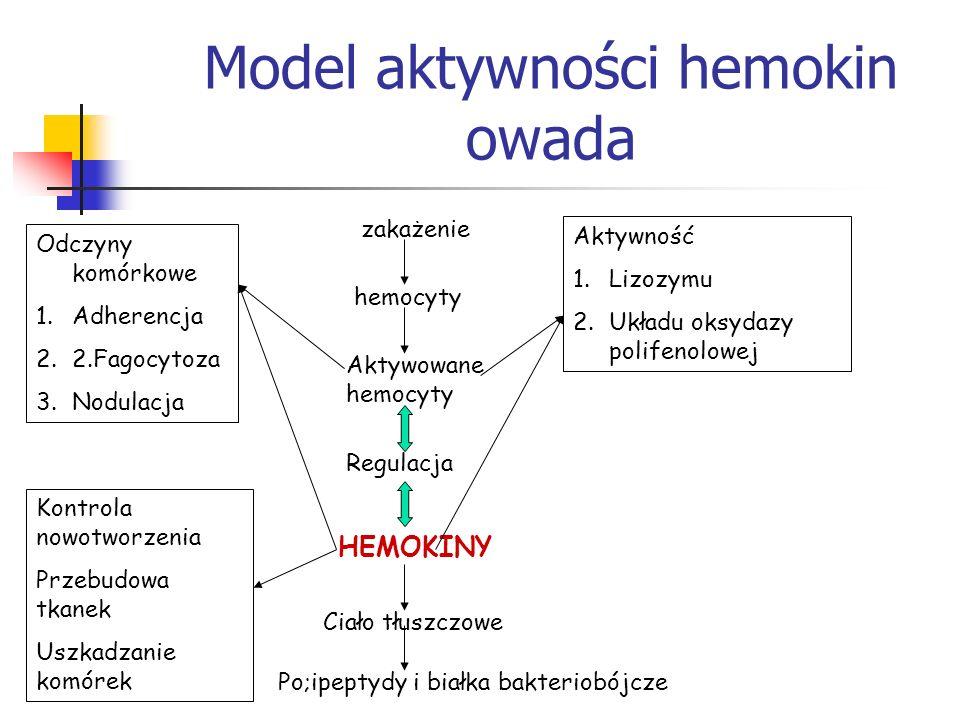 Model aktywności hemokin owada