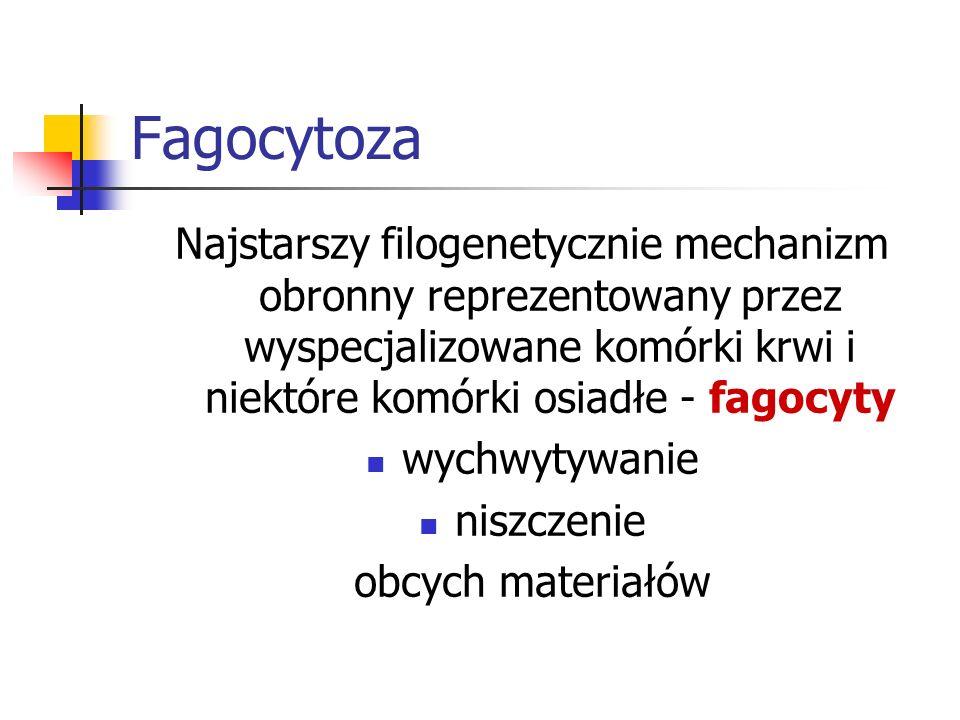 FagocytozaNajstarszy filogenetycznie mechanizm obronny reprezentowany przez wyspecjalizowane komórki krwi i niektóre komórki osiadłe - fagocyty.