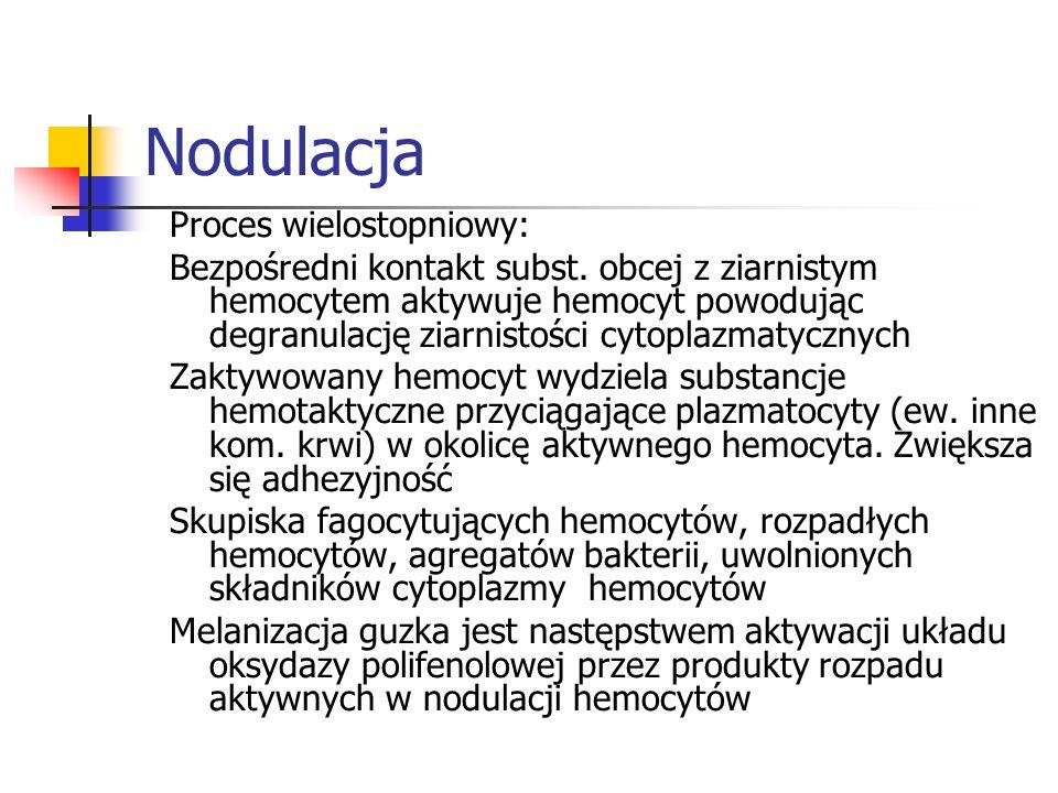 Nodulacja Proces wielostopniowy: