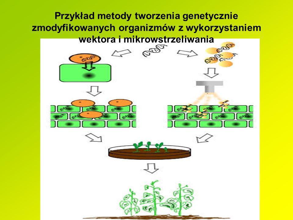 Przykład metody tworzenia genetycznie zmodyfikowanych organizmów z wykorzystaniem wektora i mikrowstrzeliwania