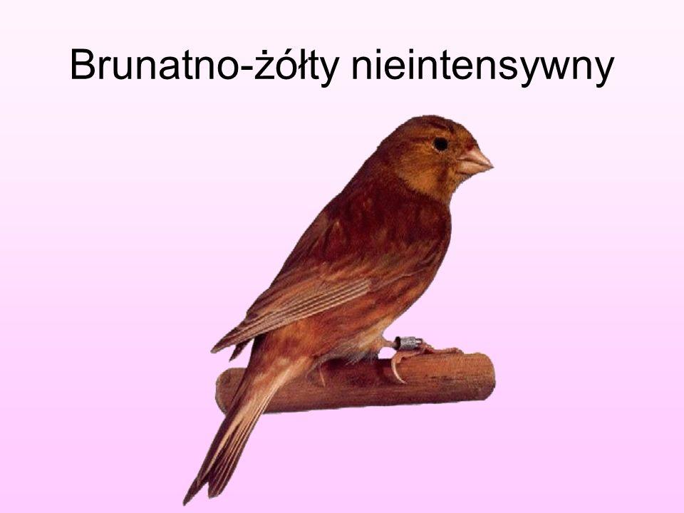 Brunatno-żółty nieintensywny