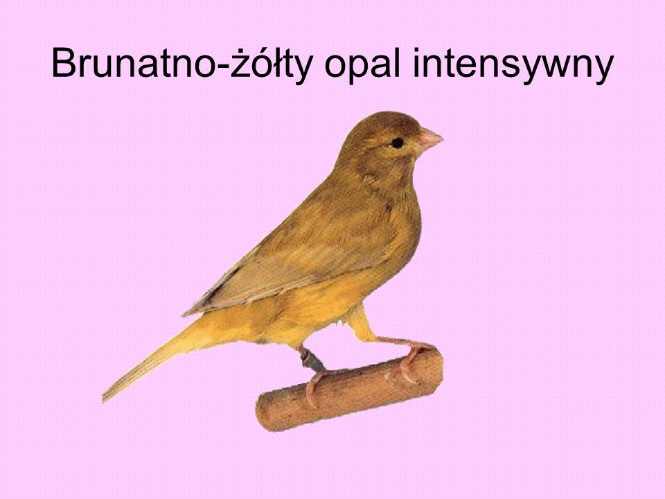 Brunatno-żółty opal intensywny