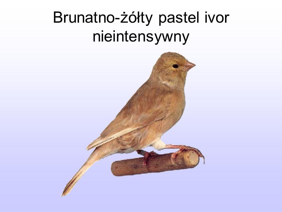 Brunatno-żółty pastel ivor nieintensywny