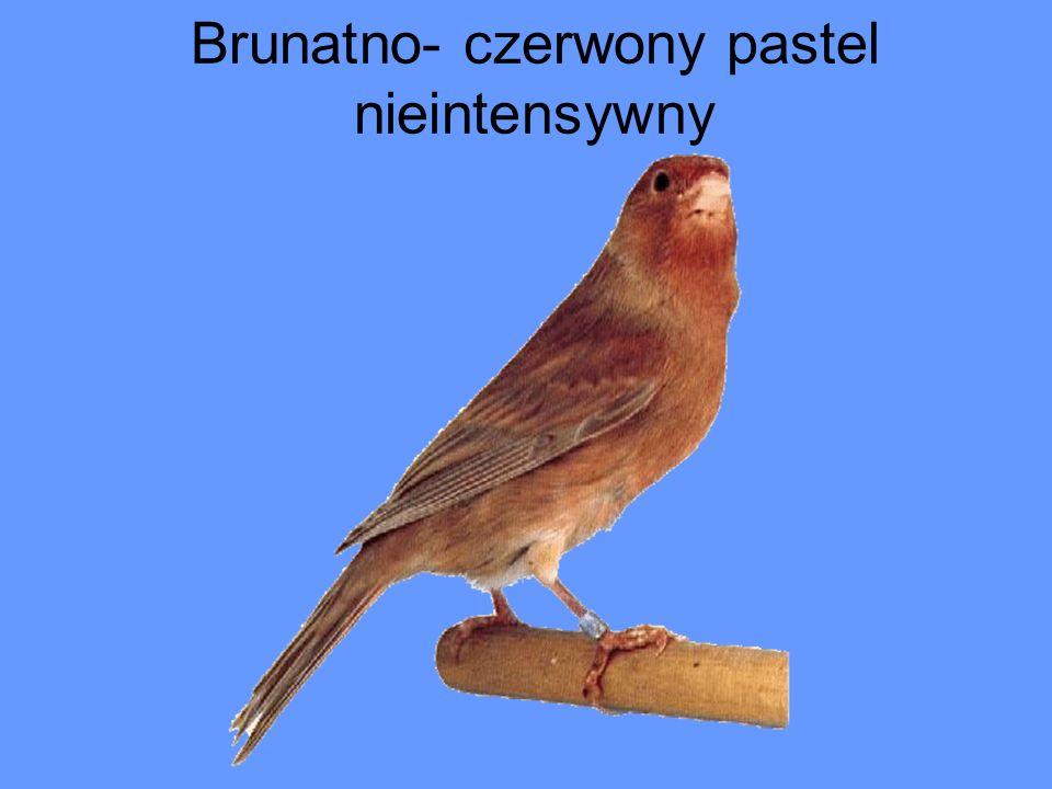 Brunatno- czerwony pastel nieintensywny