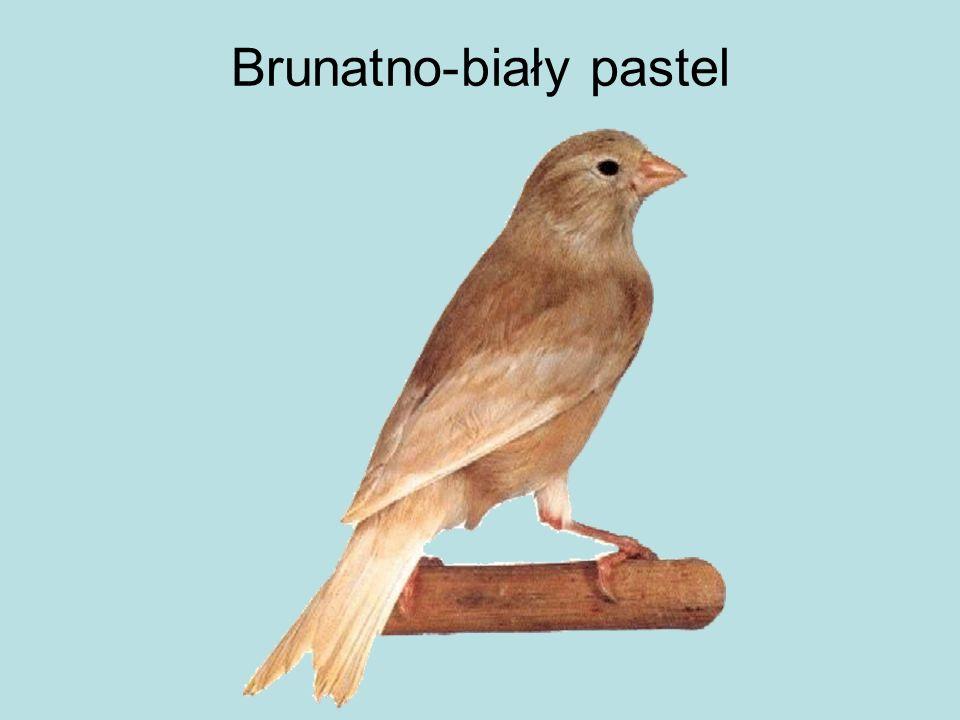 Brunatno-biały pastel