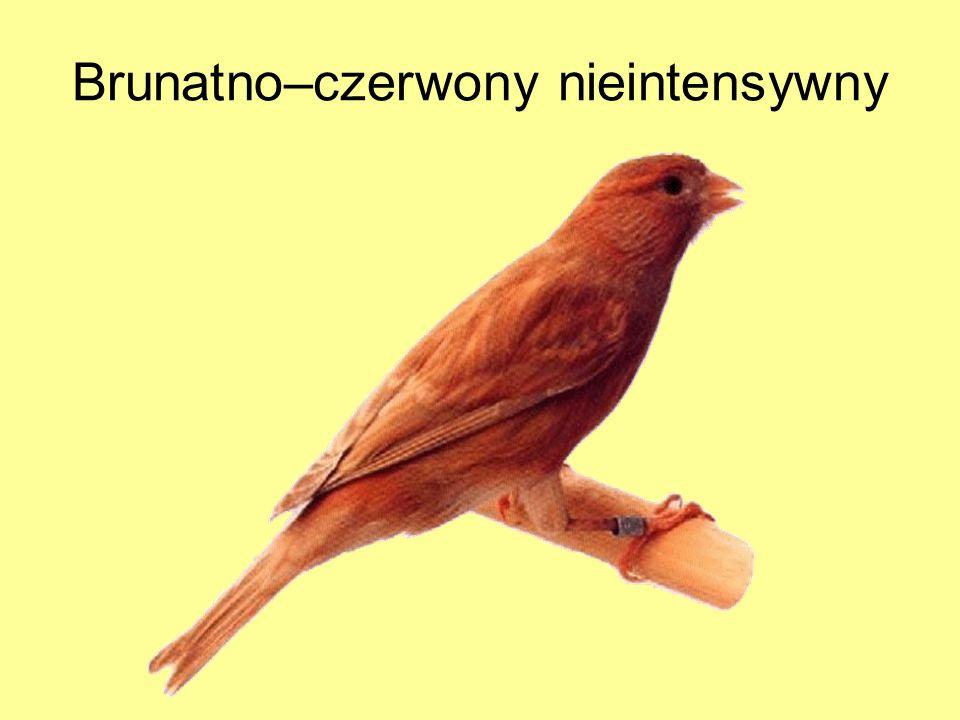 Brunatno–czerwony nieintensywny