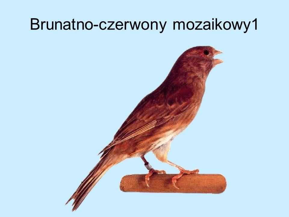 Brunatno-czerwony mozaikowy1