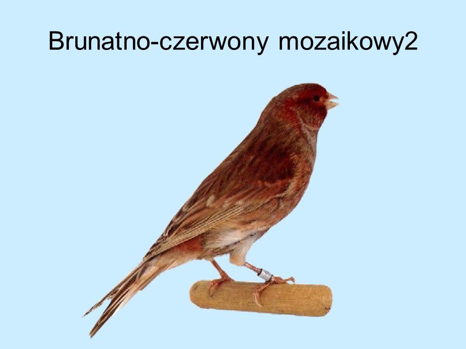 Brunatno-czerwony mozaikowy2