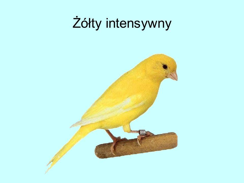 Żółty intensywny