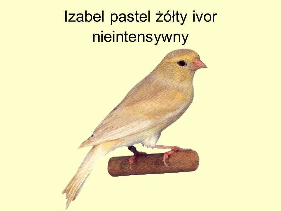 Izabel pastel żółty ivor nieintensywny