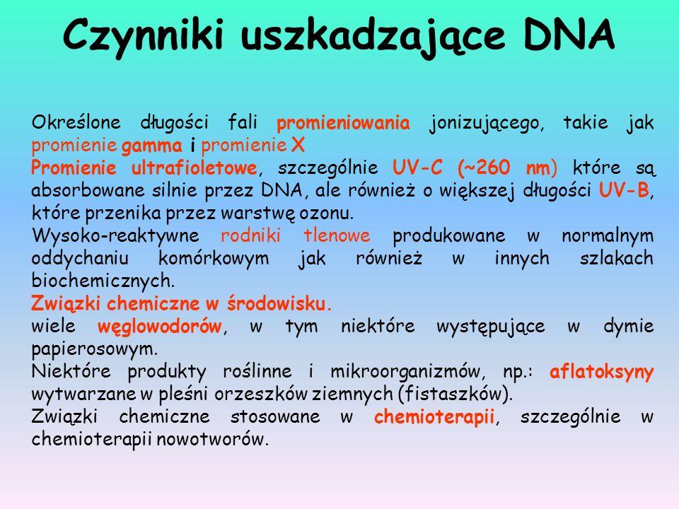 Czynniki uszkadzające DNA