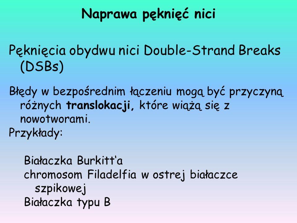 Pęknięcia obydwu nici Double-Strand Breaks (DSBs)