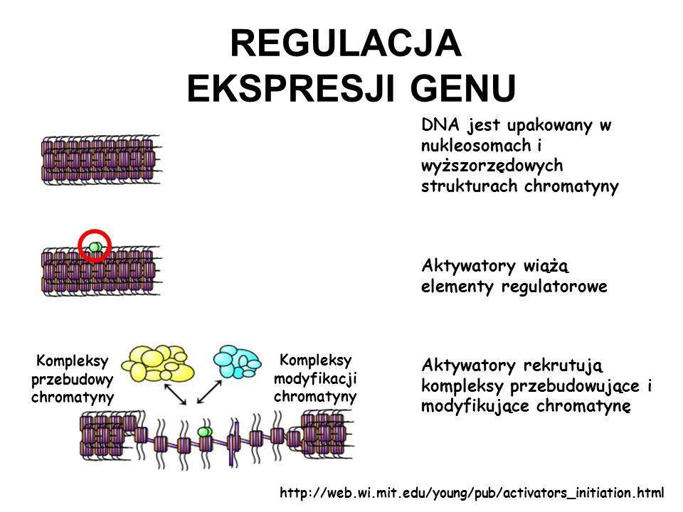 Kompleksy przebudowy chromatyny Kompleksy modyfikacji chromatyny