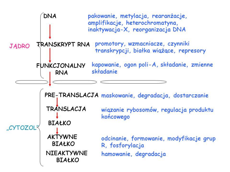 pakowanie, metylacja, rearanżacje, amplifikacje, heterochromatyna, inaktywacja-X, reorganizacja DNA