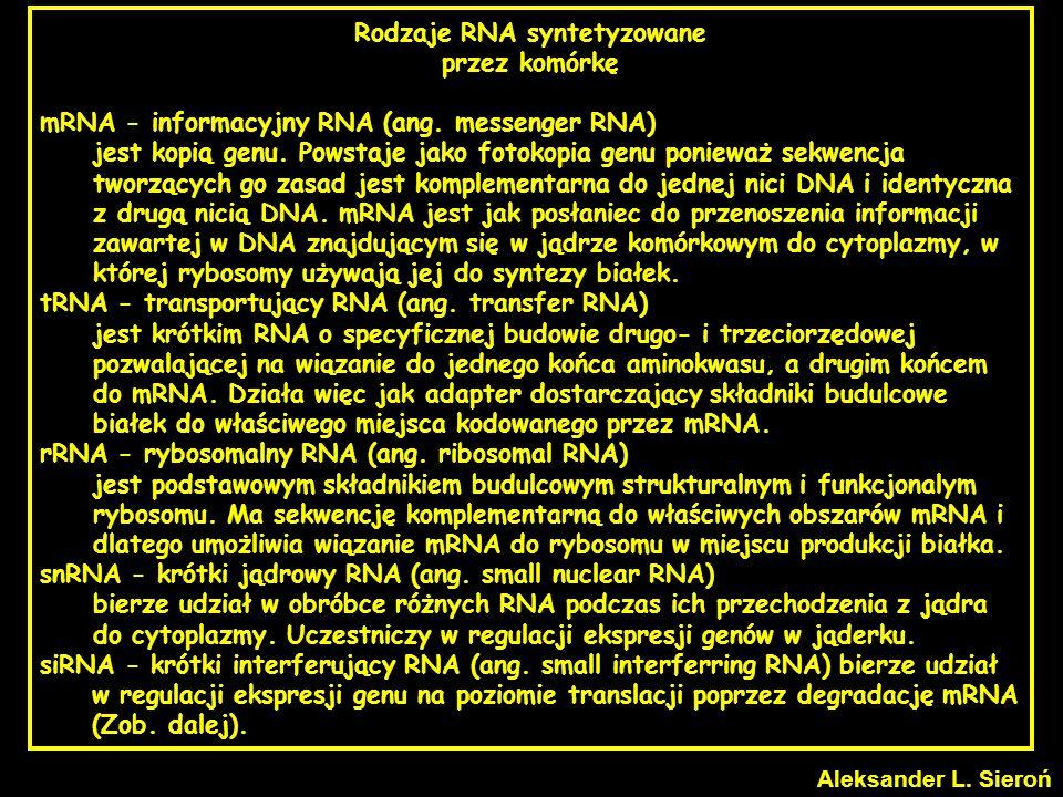 Rodzaje RNA syntetyzowane