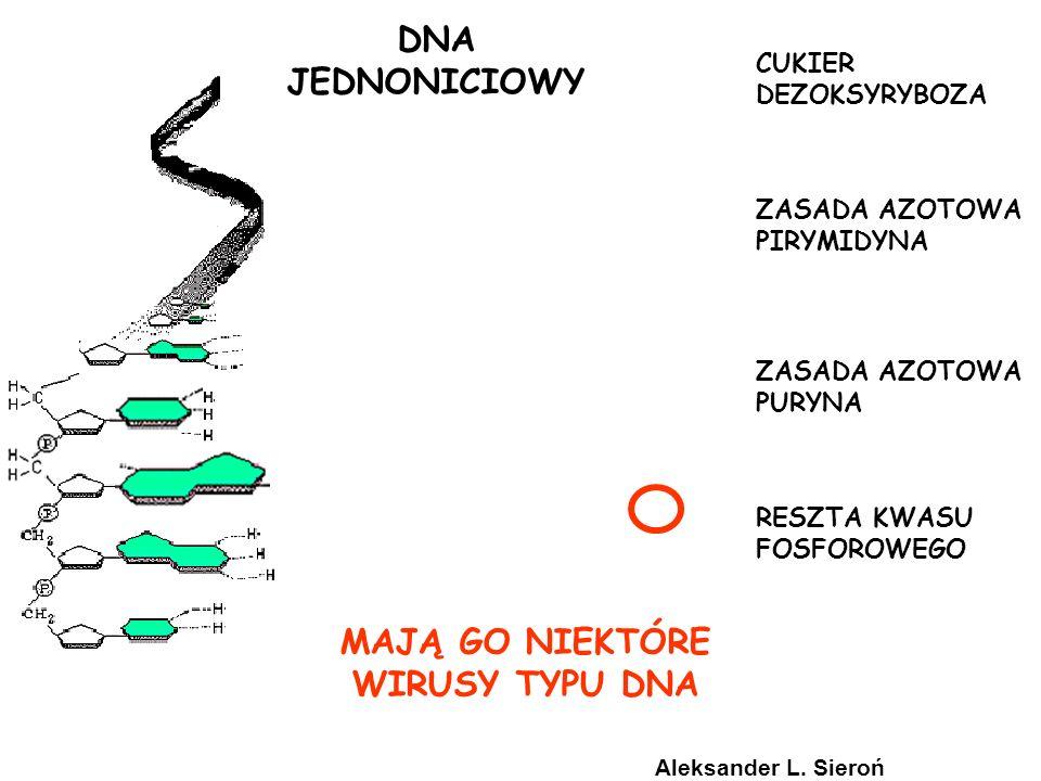 DNA JEDNONICIOWY MAJĄ GO NIEKTÓRE WIRUSY TYPU DNA