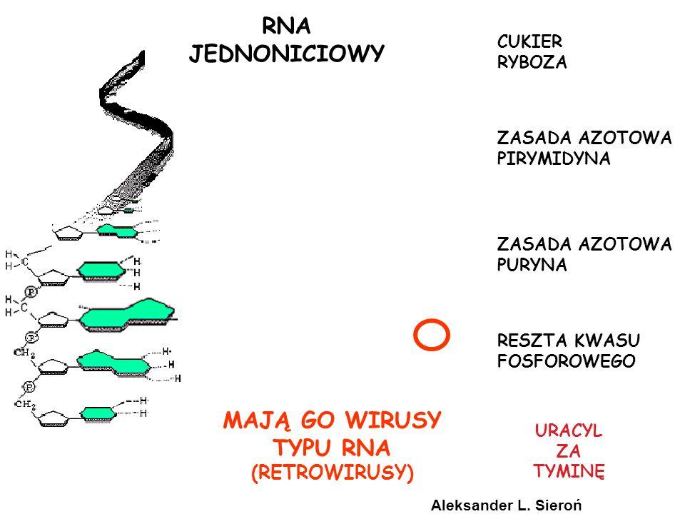 RNA JEDNONICIOWY MAJĄ GO WIRUSY TYPU RNA