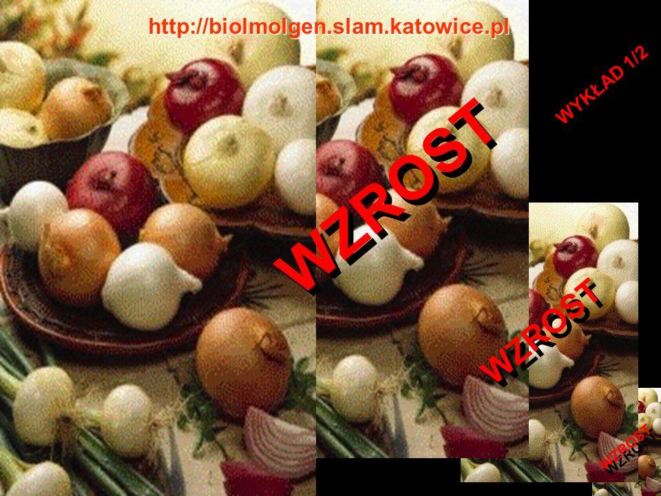 http://biolmolgen.slam.katowice.pl WYKŁAD 1/2 WZROST WZROST WZROST