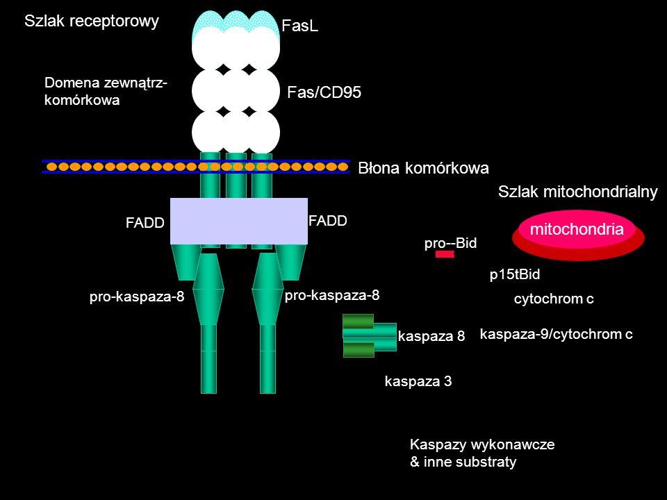 Szlak mitochondrialny