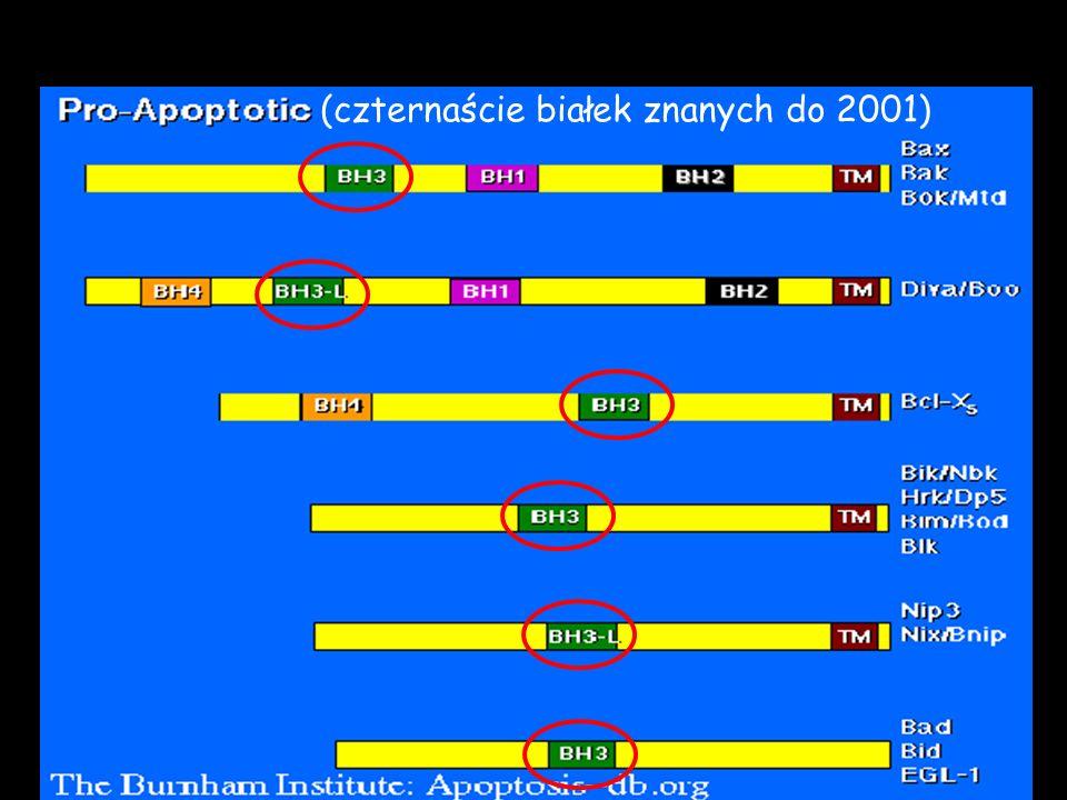 (czternaście białek znanych do 2001)