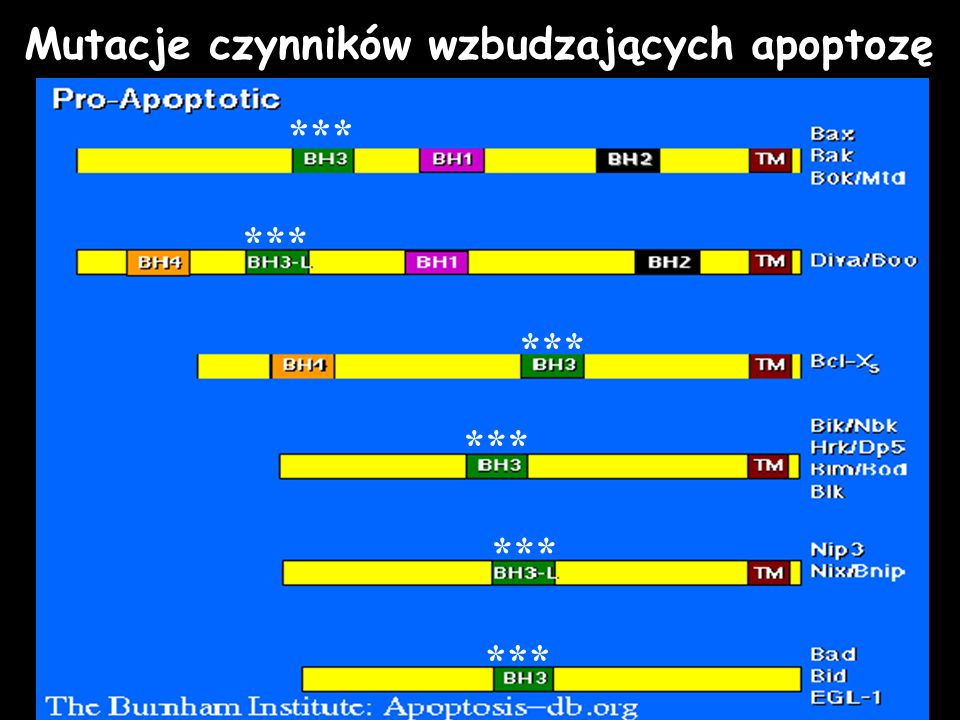 Mutacje czynników wzbudzających apoptozę
